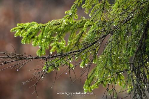 gałęzie pięknie mieniły się do promieni słonecznych..