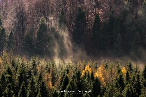 ciągle obserwując lasy mieniące się w słońcu...