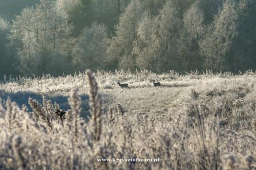 albo są tak daleko że ledwie je widać... jaki już zimowy klimat się zrobił...