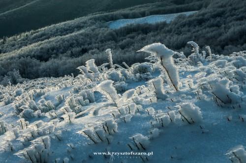 lodowe figurki...