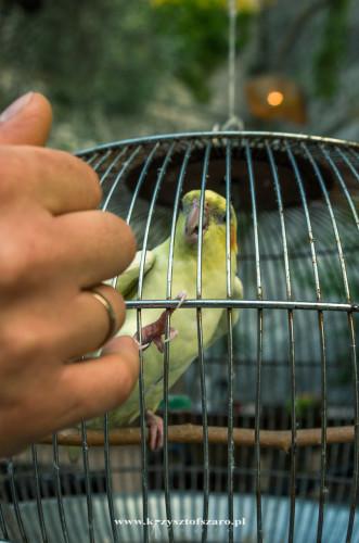 papuga nie chciała nic mówić...