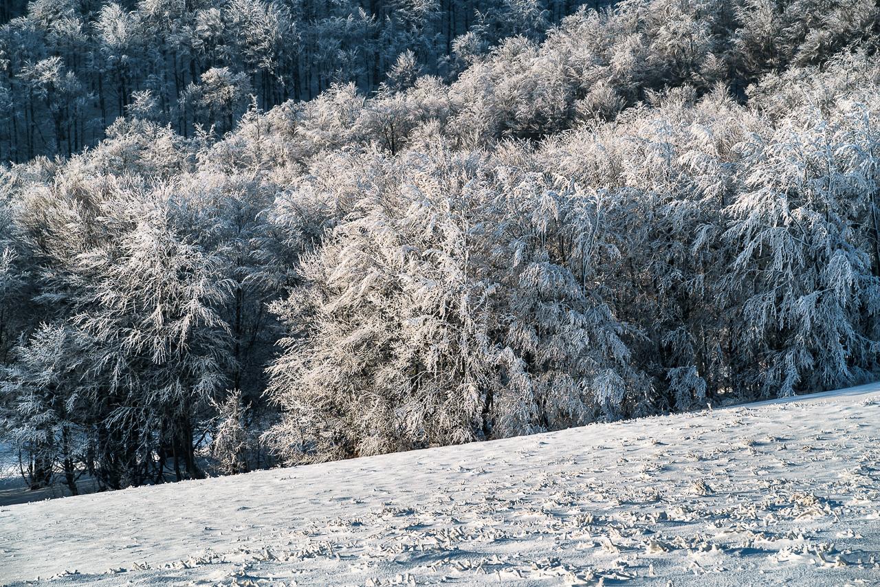 lasy wyglądaja bajkowo